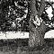 Chiara auf dem Baum